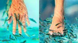 пилинг ног рыбками у себя дома